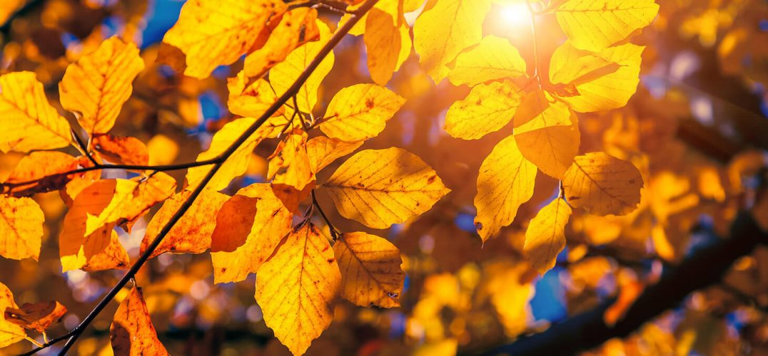 Fall foliage in the sunlight