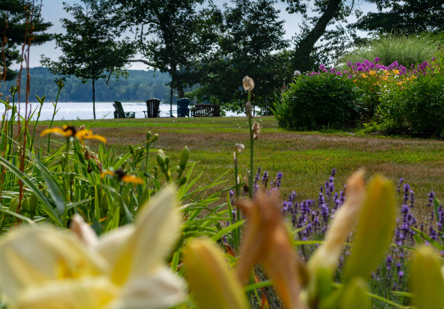 Flowers and grassy path in the Wolf Cove gardens