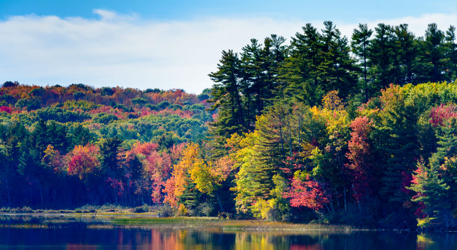 Multicolored fall trees across Tripp lake