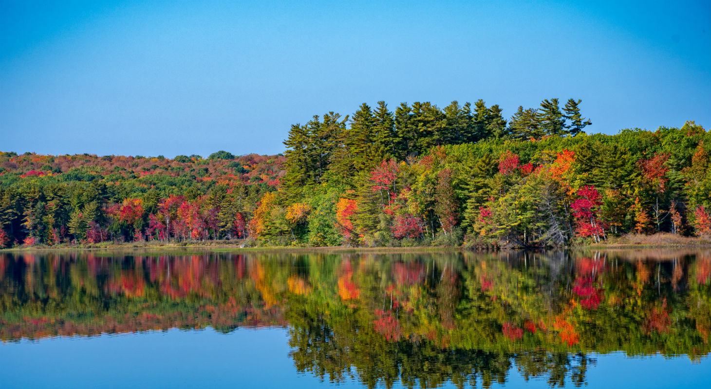 Distant multicolored fall trees reflected on shore of Tripp lake past dock with rowboat