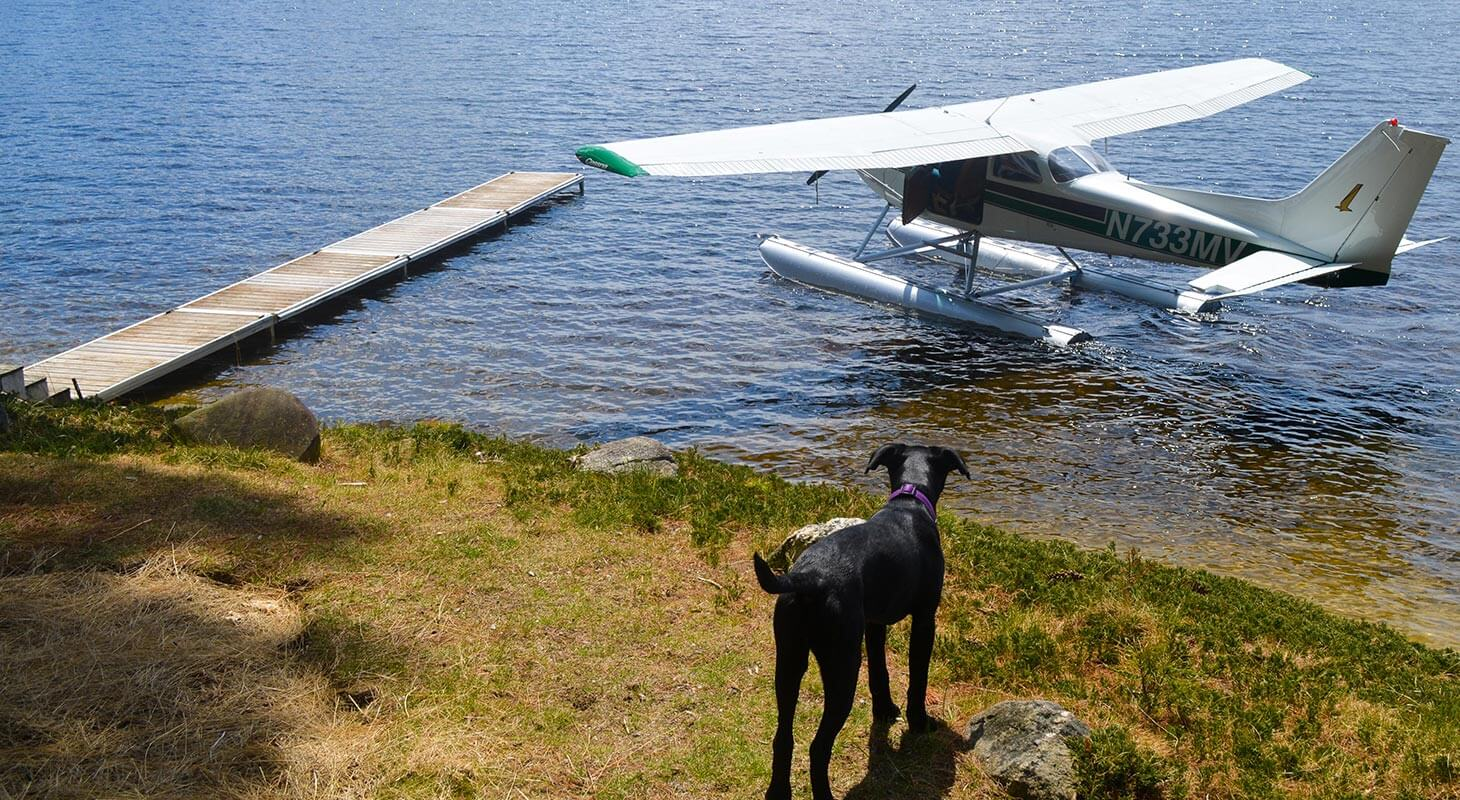 Black dog on lawn overlooking water with a plane