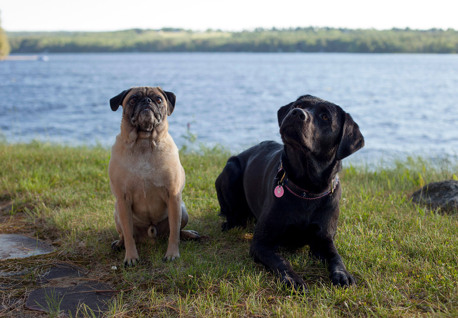 Maine Pet Friendly Lodging with Gabby and Ellie