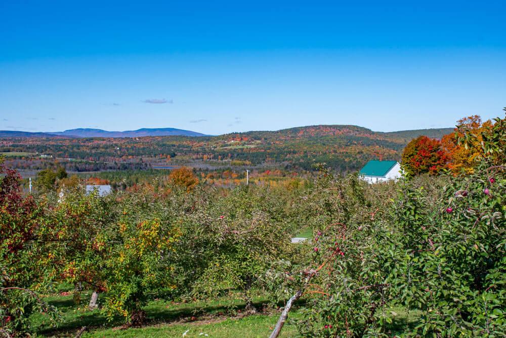 The orchard foliage season view