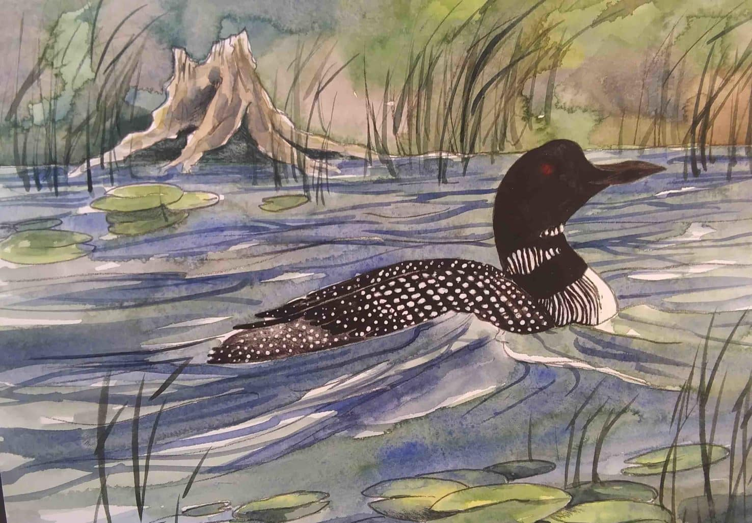 Watercolor painting of a loon