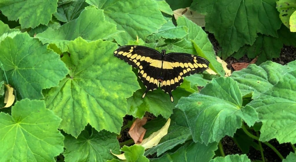 Black and yellow butterfly on green plants