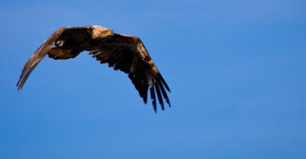 Birding in Maine