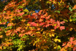 Fall Foliage at Wolf Cove Inn