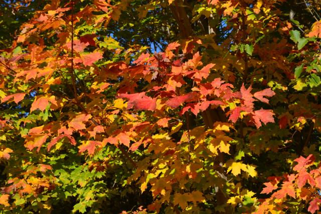 Fall Foliage at Wolf Cove Inn