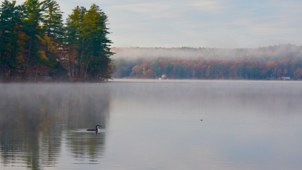 Loon on Tripp Lake