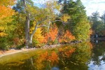 Fall Foliage in Maine