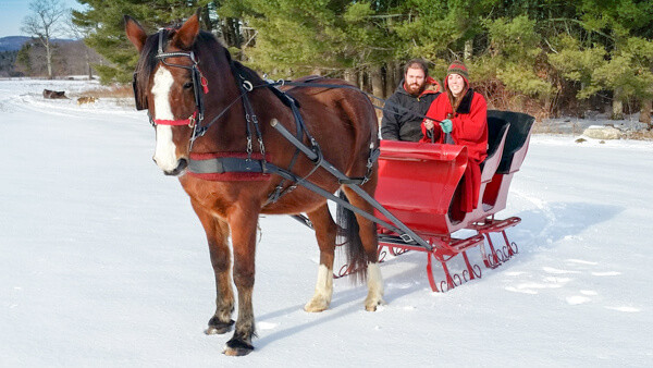 romantic sleigh ride at Carousel Horse Farm