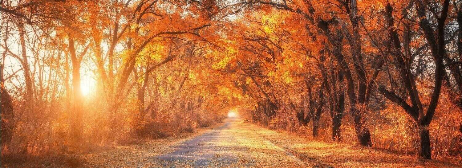 Maine in the Fall-Road through Fall Foliage